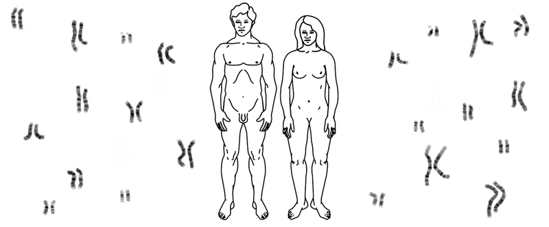 Chromosomes.png
